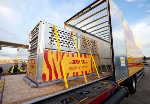 DHL's dedicated tiger team has done an excellent job of ensuring the success of this project