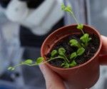 The researchers' starting point was the calcium pump located in the cell membrane of the model plant thale cress (Arabidopsis thaliana) Photo: Jørgen Nielsen.