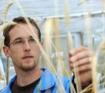 Simon Krattinger is hoping to mimic wheat's evolutionary changes in rice and sorghum to improve disease resistance. Credit: Carl Davies, CSIRO
