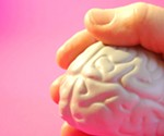The scientists' model shows how some types of ADHD medicine influence the brain's reward system