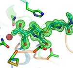 Two structural 'snapshots' showing the carbapenem antibiotic meropenem bound to the SFC-1 enzyme. Top panel shows intact antibiotic; bottom panel shows an intermediate step in breakdown of the drug. The position of the antibiotic is indicated by the green mesh. Image by Dr Jim Spencer