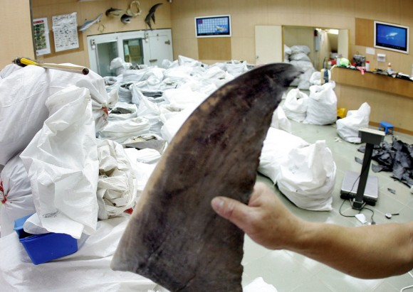 Wholesale shop keeper displaying a shark fin