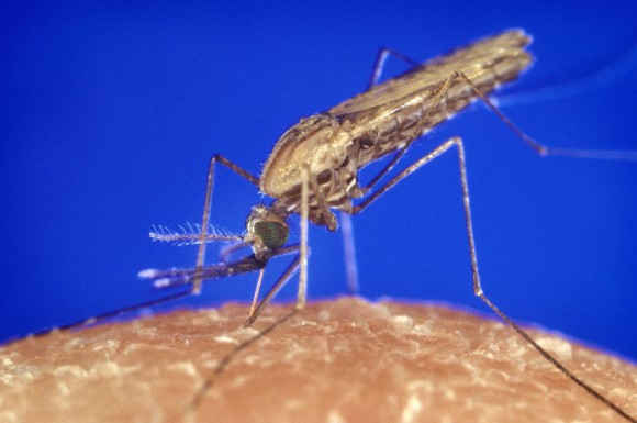 Malaria, which is caused by mosquito bites in the tropics, can be fatal - but it doesn't have to be. New research offers hope for early detection of the disease's lethal variants. (Photo: CDC & James Gathany)