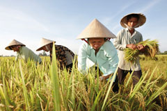 In Vietnam, rice is mostly grown by smallholder farmers. With the opening of its new Bayer SeedGrowth™ Center, Bayer CropScience hope to increase knowledge of modern seed treatment technologies.