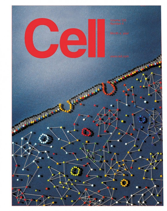 The unique map has been published by the renowned scientific journal Cell as its cover story. (picture: Lavinia Liberali and Luca Pitoni)