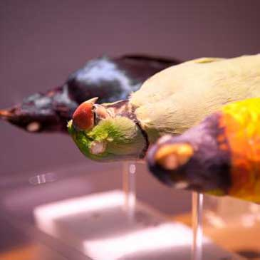 Curpanion brings often-neglected museum taxidermy specimens back to life