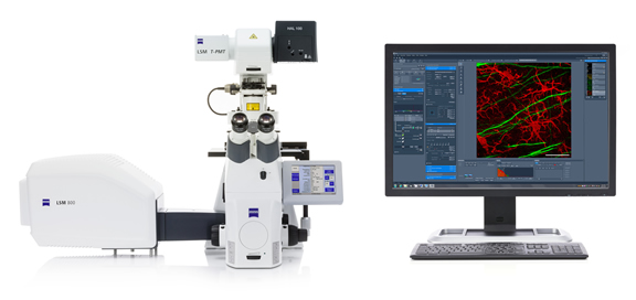 ZEISS LSM 800 with Airyscan: Your compact confocal power pack.