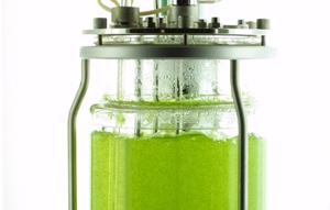 Moosbioreaktor für die Produktion menschlicher Proteine. Quelle: Pflanzenbiotechnologie/Universität Freiburg