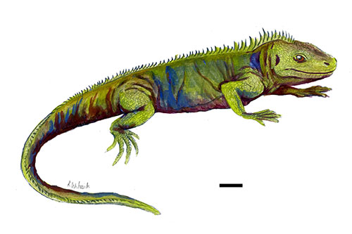 A reconstruction of what Clevosaurus sectumsemper may have looked like. The scale bar denotes 1cm. C. sectumsemper is the smallest clevosaur species ever described. © Katharine Whiteside