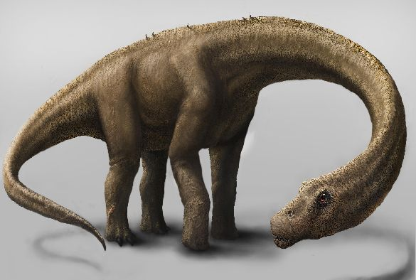 An artist's rendering of the dinosaur Dreadnoughtus. Credit: Jennifer Hall
