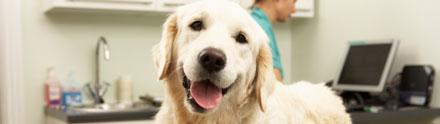 The University of Nottingham's CEVM researchers to hold series of  training events on evidence-based veterinary medicine (EVM) across the UK