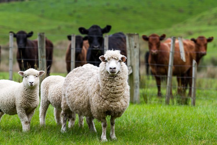 University of Glasgow, The Pirbright Institute: repeated emergence of the Bluetongue virus amongst European livestock in recent decades shaped by its ability to re-assort its genes