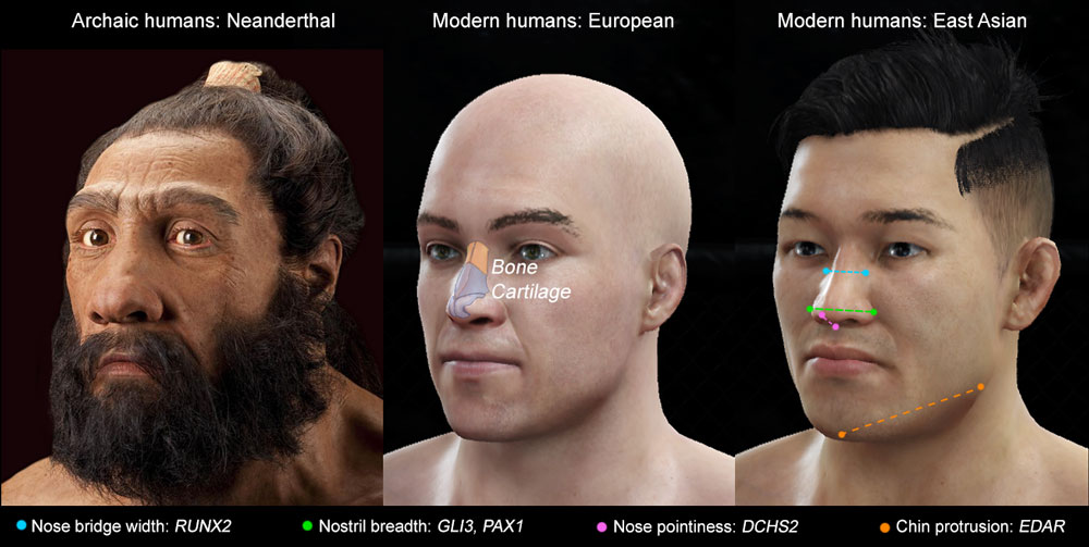 UCL-led study identified the genes that drive the shape of human noses