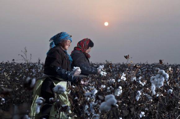 Research: majority of international companies using most cotton globally are failing to deliver on cotton sustainability