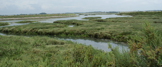 University of St Andrews: New mobile phone app to be used to collect information about Britain's saltmarshes