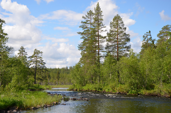Umeå University research: both land and aquatic environments need to be integrated when restored