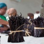 Packing vanilla in Madagascar