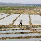 EBRD and EU launch programme to support farmers in Tajikistan