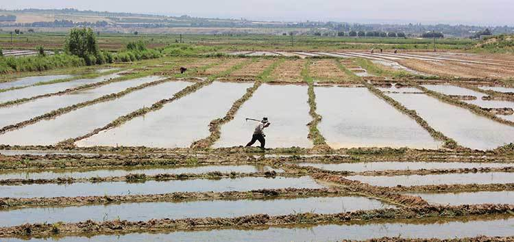 EBRD and EU launch programme to support farmers in Tajikistan