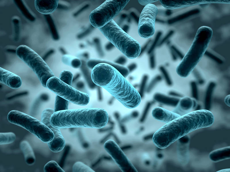 In mice with a normal gut flora, the microbiota are involved in cholesterol metabolism, thereby assisting with the efficient utilization of the animal fats. (Photo: Fotolia/ norman blue)