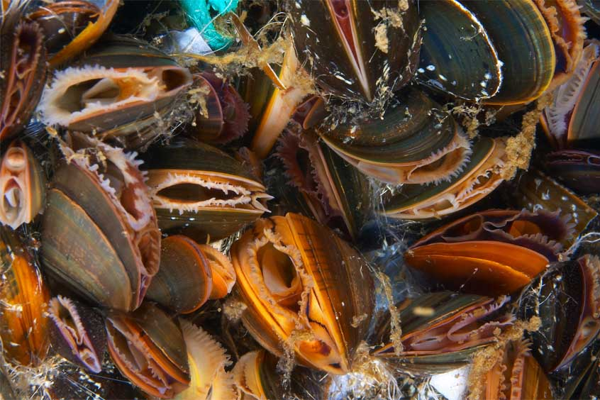 Scottish Association for Marine Science (SAMS): Future of