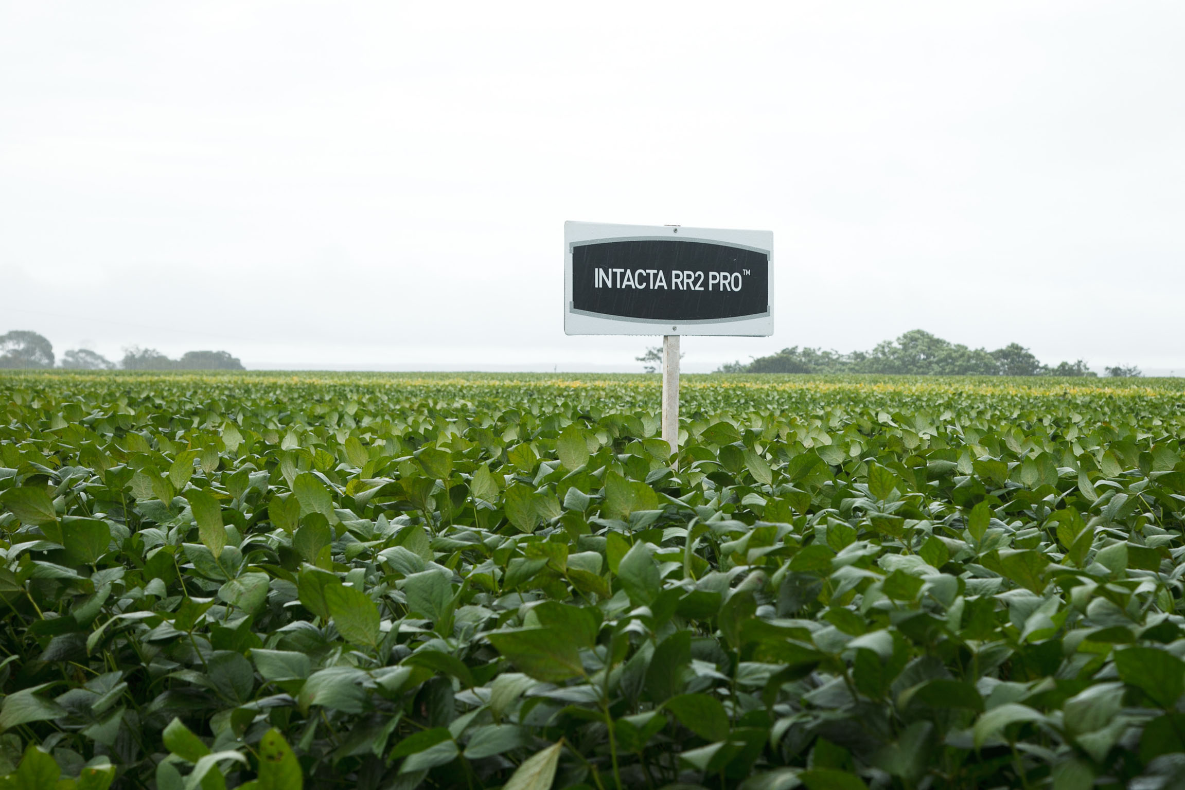STUDY: Bayer's Intacta RR2 PRO™ soybeans technology helps farmers